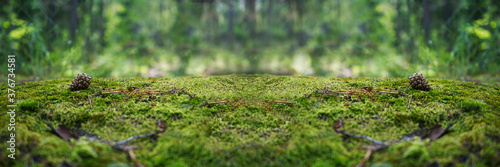 A stone covered with green moss in the forest Fototapeta