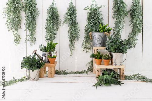 Fotografija Green leaves on white wood background