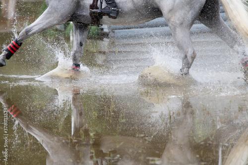 Fototapeta NC State Wolfpack Equestrian Team Rider thru Water at Carolina Horse Park