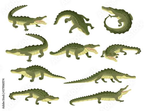 Canvas Print Set of green crocodile character big carnivore reptile cartoon animal design fla