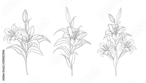 Fotografia hand drawn beautiful  lily bouquets