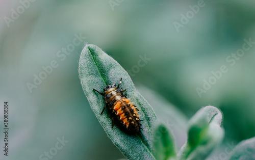 Fototapeta insect on leaf