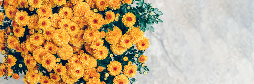 A bouquet of orange chrysanthemum flowers in pot with light background and copy Fototapet