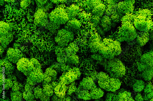 Obraz na płótnie The texture of green moss
