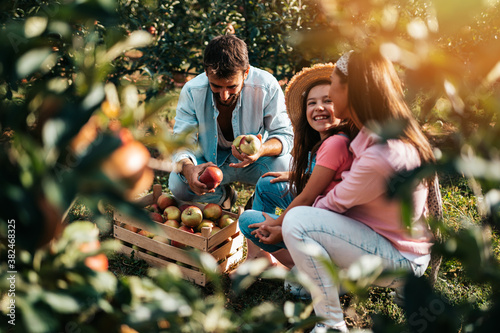 Fotografie, Obraz Happy family enjoying together while picking apples in orchard.