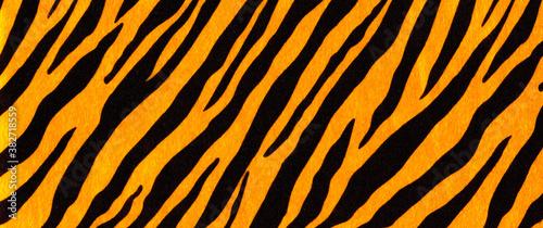 Obraz na plátne Background with a pattern of tiger stripes, tiger color