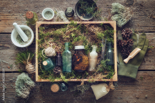 Fotografia Healthy infusion and oil bottles, wooden box of healthy moss, lichen, moss, juniper, pine cones on wooden table