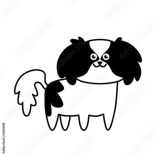 Fototapeta Cute little dog Japanese Chin