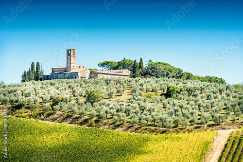 Olive trees with old building