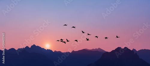 Fotografia Sandhill Cranes flying across pink clear sky