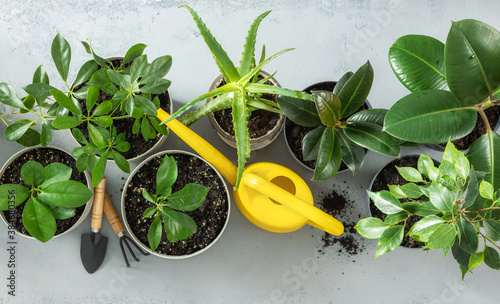 Obraz na plátne Set of various house plants with watering can and gardening tool top view