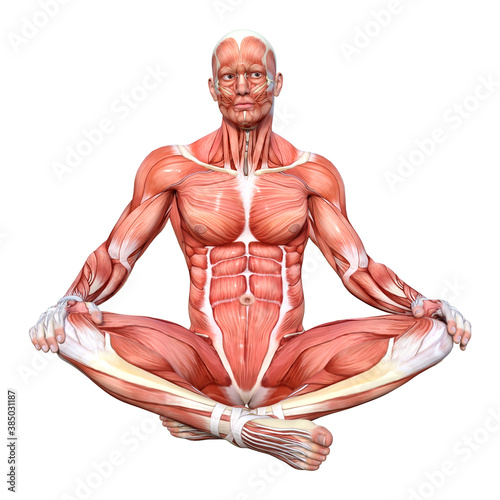 Photo 3D Rendering Male Anatomy Figure on White