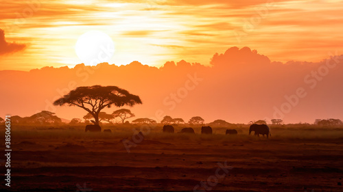 Photo A herd of African elephants walking in Amboseli at sunset