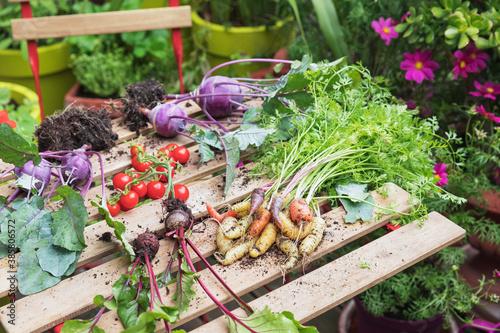 Fotografia, Obraz Plants and vegetables over table in urban garden