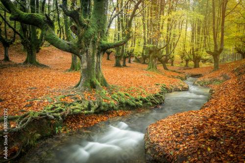 autumn green beech forest otzarreta river