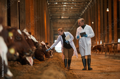 Fotografie, Obraz Full length portrait of two veterinarians walking towards camera while inspectin