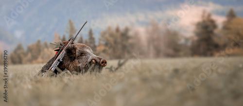 Fotografia Caught a large wild boar as a hunting trophy, (Sus scrofa), beautiful white teeth