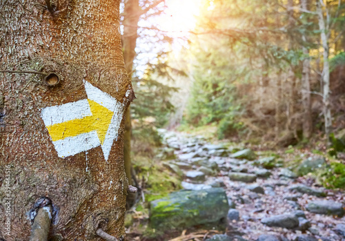 Canvas Print Hiking trail marker on a tree in mountain forest, selective focus, Karkonosze National Park, Poland