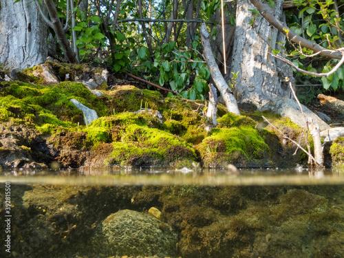 Photo Riparian habitat ecosystem of forest lake shore