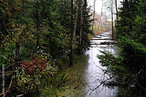 Vászonkép beaver brook autumn forest cloudy day