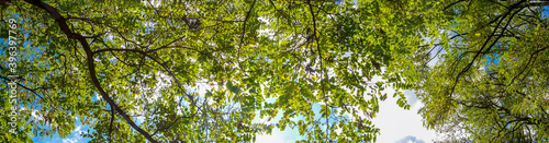 Photo Tree branches with fresh green leaves in the forest