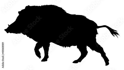 Fotografia, Obraz silhouette of a boar