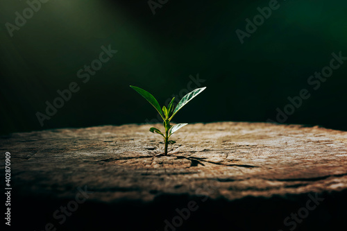 Fotografia New life growth future innovation concept ,a strong seedling growing in the old
