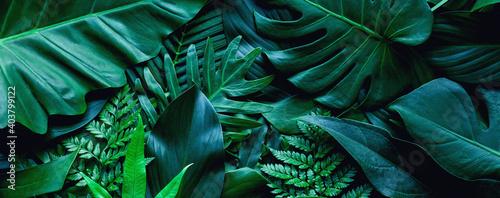 Fotografia closeup tropical green leaf background