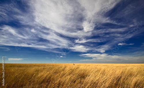 Fotografia Sitting All Alone On The Plains Of Western Kansas