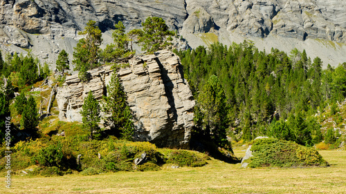 Photo Plants Growing On Rocks