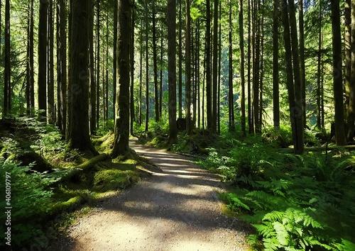 Billede på lærred Walkway Amidst Trees In Forest