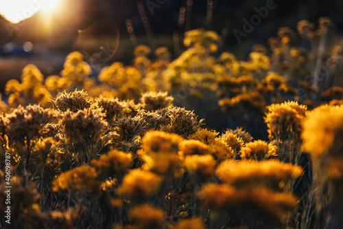 Obraz na płótnie Close-up Of Yellow Flowering Plants On Field