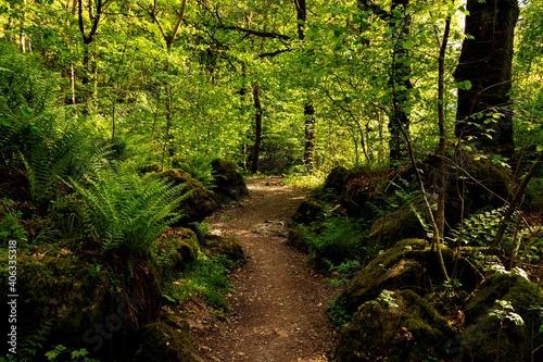A Woodland Walk Around Derwent Water Fotobehang