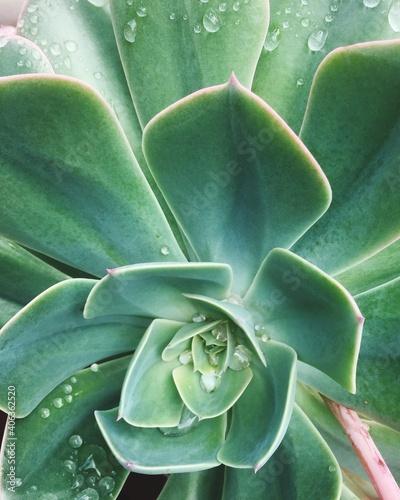 Canvas Print Close-up Of Succulent Plant