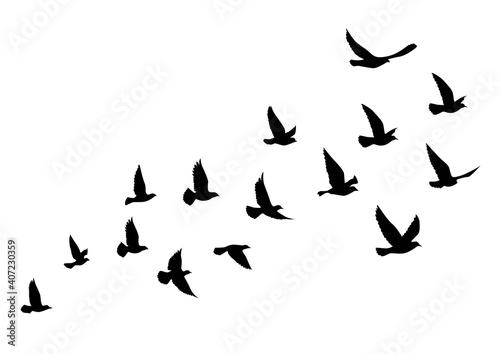 Valokuvatapetti Flying birds silhouettes on white background