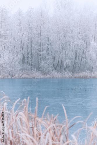 Fototapeta Frozen lake in snowy forest landscape
