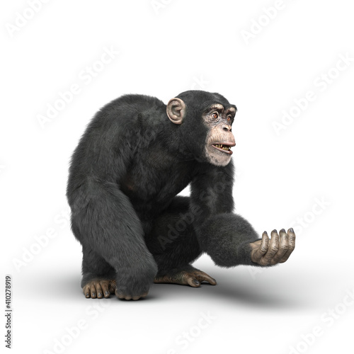 Fotografia Chimpanzee crouching and holding out a hand.