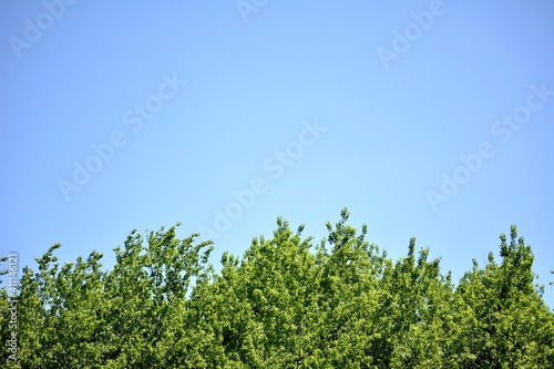 Canvas Print Low Angle View Of Plants Against Clear Blue Sky