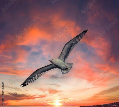 Valokuvatapetti Seagull flying at sunset