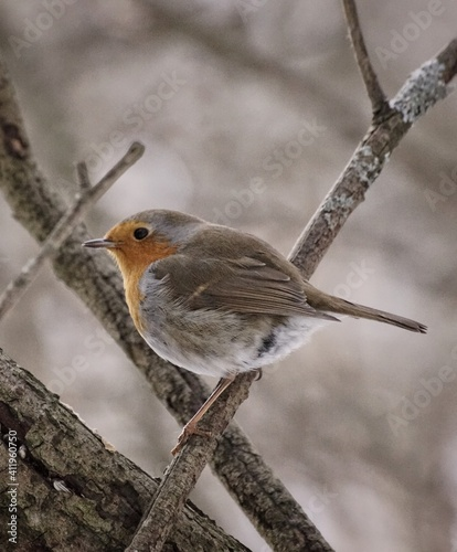Fotografie, Obraz Close-up Of Bird Perching Outdoors