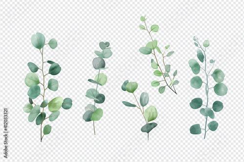 Fotografie, Obraz Eucalyptus leaves set isolated on transparent background