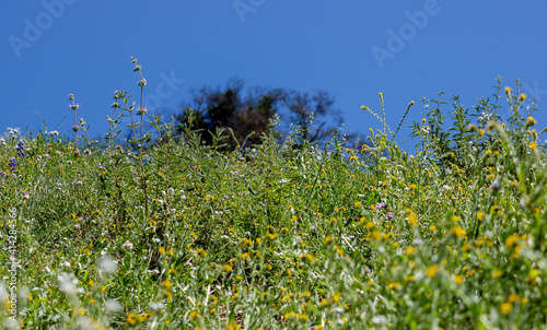 Valokuva A spray of spring wildflowers on a hillside with a bright blue sky in the background