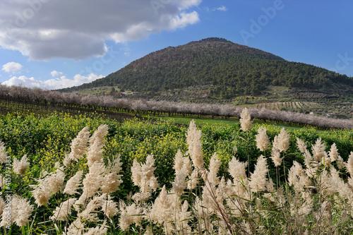 Fényképezés Beautiful scenery of a field newarthe Mount Tabor in Galilee Israel