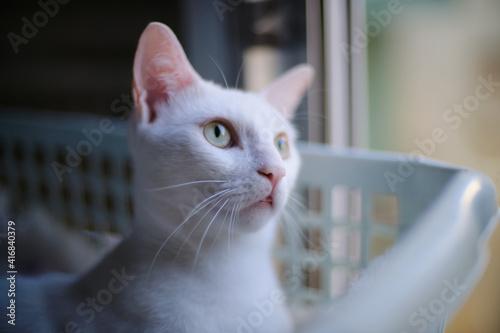 Photo Floki the cute white cat