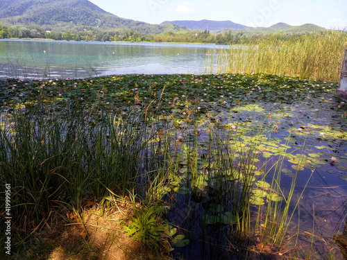 Obraz na plátně Nenúfares en flor y juncos en el lago de Banyoles (Girona)
