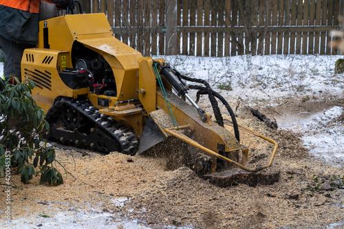 Fototapeta Tree stump removing process with yellow stump grinder