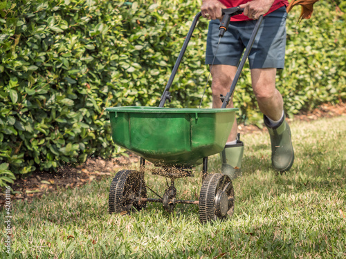 Photo Man fertilizing and seeding residential lawn with manual grass seed spreader