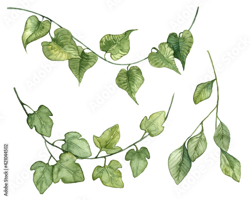 Stampa su Tela Collection of watercolor hand painted ivy leaves