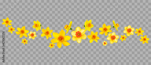 Canvas Daffodils decor on transparent background