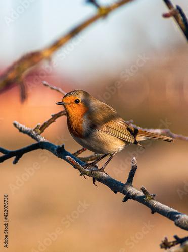 Obraz na plátně Close-up Of Bird Perching On Branch